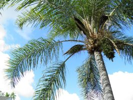 palm tree and sky by bwall49