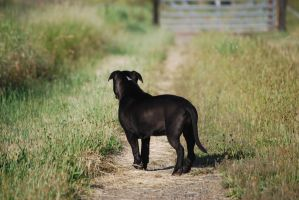 Black Dog 28 by xxtgxxstock