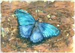 blue butterfly by kosharik69