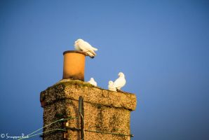 Birds of a Feather by SnapperRod