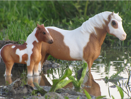 A Chincoteague Pair by TheDeathOfAutumn