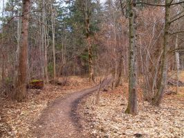 Path through the Woods by Limited-Vision-Stock