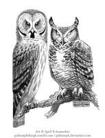 Bubo and Strix by pallanoph
