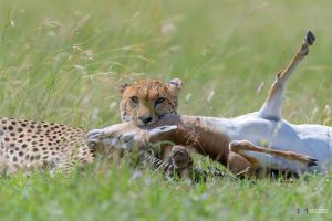 The Kill by vinayan