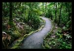 the long and winding road by lorrainemd