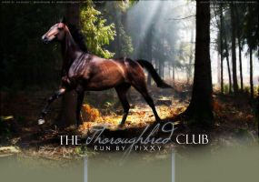The Thoroughbred Club by Impressive-Instant