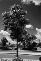Bw tree by netherl