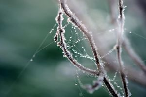 Dreamcatcher in Morning Hours by FeliDae84