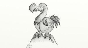 Proud Dodo by Asocan