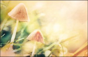 Mushrooms in a field of gold by MarkGalbreath