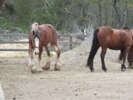 Draft horse stock by WistfulDesigns
