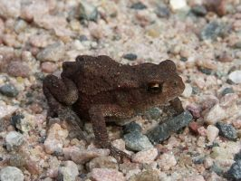 Thumbnail Frog by duncan-blues
