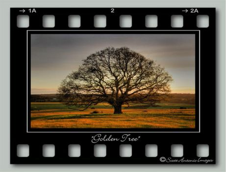 Golden Tree by scoot75
