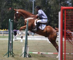 STOCK Showjumping 420 by aussiegal7
