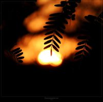 Silhouette... by DLeed
