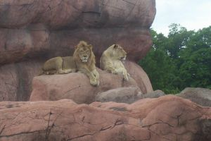 Lions by Greeny25