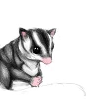 Unfinished Sugar Glider by momochisa