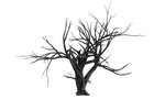 Old Tree PNG.. by WelshDragonStockNArt