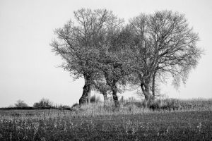 Trees on the field III by Tjabula