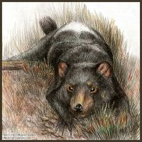 Tasmanian Devil by Illusir