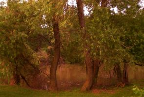 Trees by the Pond by g2k556