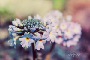 Flower 1 by xAmorphousx
