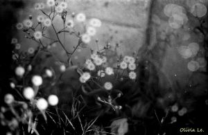 now it's nothing but flowers by OliviaLe
