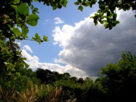 Greenwich Park Storm Approach by Tigles1Artistry