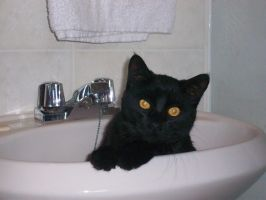 salem in the sink by coloredragon