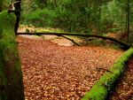 Moss and leaves by Selenia-actimel