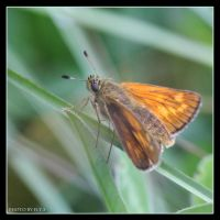 Butterfly 9 by Globaludodesign