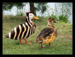 Wild ducks by Jaydid