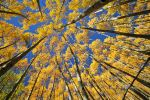 Golden Canopy by HighCountryImages