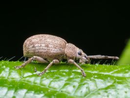 7mm of Bug with Sesame by IceManDBB