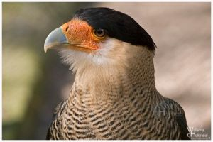 CaraCara by W0LLE
