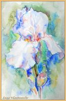 Irises 2 by LORETANA