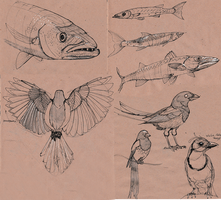 Barracuda and magpie sketches by EleniWat