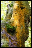 Rusty Tree Trunk by grimleyfiendish