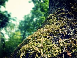 moss by JustMe255