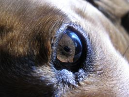 Dog eye by FireStump