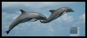 Flying Dolphins by ntora