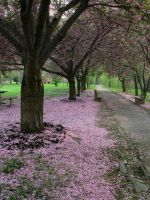 Pretty Path 2 by bean-stock