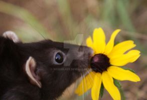 flower sniffer by boxerbaby