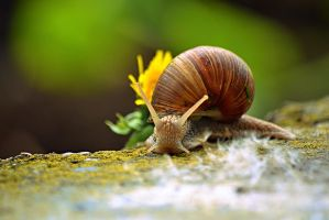 snail - Evening Walk by SvitakovaEva