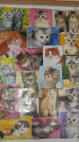Wall of the kitties by starclanwarrior0909
