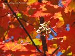 HERE COMES FALL - Monday by Kimi-Parks