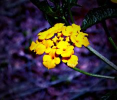 Hello Yellow by Mechpics