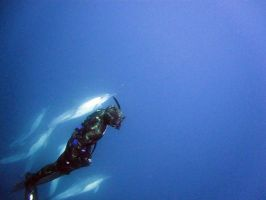 Diving with Dolphins by abzde