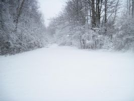 Forest Path in Winter 10 by Martut