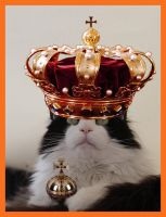 We have a king in Netherlands by Claudia008